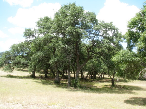 19.207 acres - Beautiful outlook over the Hill Country